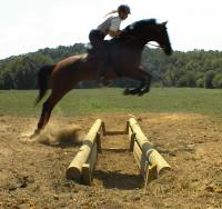 lorien stable learning to ride over jumps